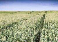Компания Bega планирует инвестиции 12 млн евро в зернохранилища
