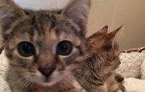 Dvi katytės ieško namų