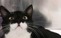 Katinui Ignui reikia namų