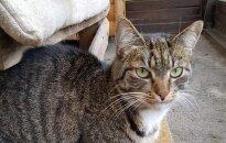 Išgelbėk katiną Meukį – jam reikia namų