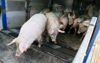 На ферме в Йонавском районе из-за африканской чумы уничтожат 23 000 свиней