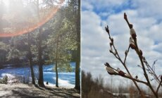 Pavasario ženklai
