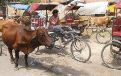 Vairavimo iššūkiai Indijoje: arba aš tau, arba tu man