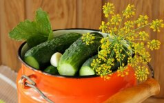Silpnai parauginti agurkai – TOP 3