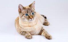 Širdį šildanti istorija apie stebuklingai išgelbėtą nepaprasto likimo katę