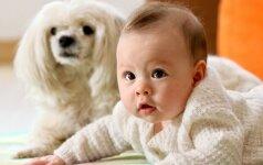2 milijonai peržiūrų: šuo ir kūdikis VIDEO