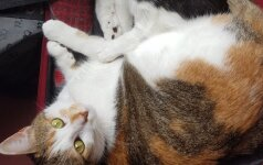 Sprendimas pasiimti kates į Izraelį kainavo ne vieną šimtą eurų