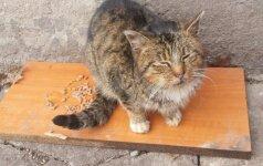 Liūdna katinėlio istorija: prašoma parama gydymui
