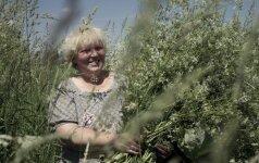 Žolininkė A. Karaliūnaitė: ši gėlė – ir nuo vėžio, ir nuo senatvės, ir nuo viršsvorio
