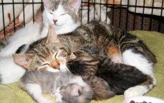 Kačiukų šeimynai reikia pagalbos