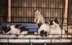 Šiltnamyje gimusiai kačiukų ketveriukei reikia globos