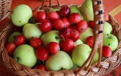 3 kitokių uogienių su obuoliais receptai