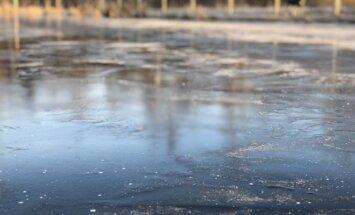 žiema, miškas, pelkė, orai, sniegas, šaltis, ledas,