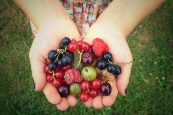 9 arbatėlės iš lietuviškų vasaros augalų ir uogų, kurios gydo