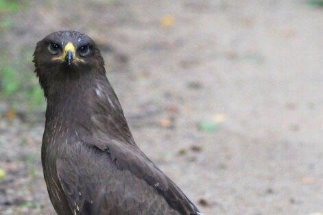 Rokiškio r. moteris užfiksavo į Raudonąją knygą įrašytą paukštį