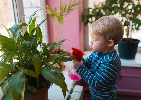 Nematomas pavojus vaikams: 5 labai populiarūs ir nuodingi kambariniai augalai