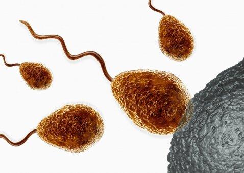 Kokia sperma yra gera ir tinkama apvaisinimui