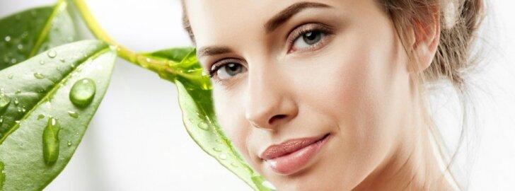 Neįtikėtina arbatmedžio nauda tavo grožiui ir sveikatai