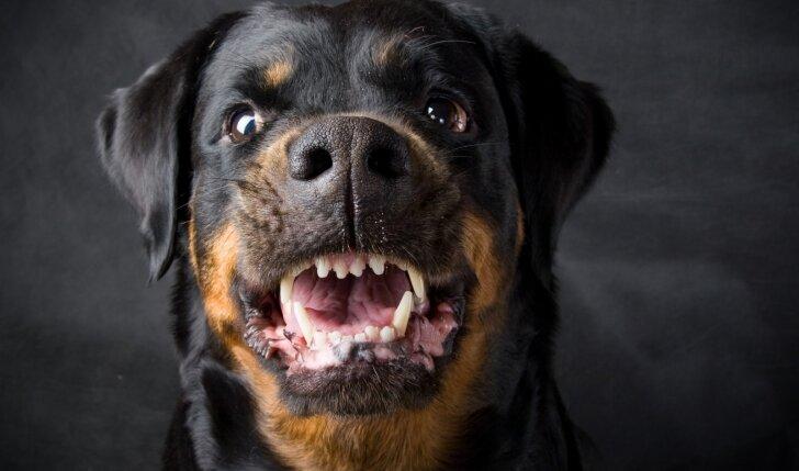 Svarbu žinoti: kaip elgtis, jei matai, kad gali būti užpulta šuns