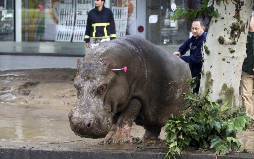 Odstrzał zwierząt po powodzi w Tbilisi
