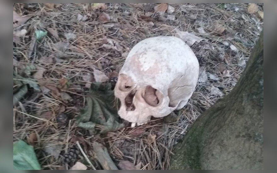 На eBay начали массово продавать человеческие черепа