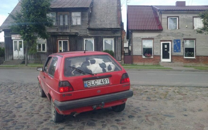 """Telyčios automobilyje A.Jurevičiūtės (""""Šilutės naujienos"""") nuotr."""