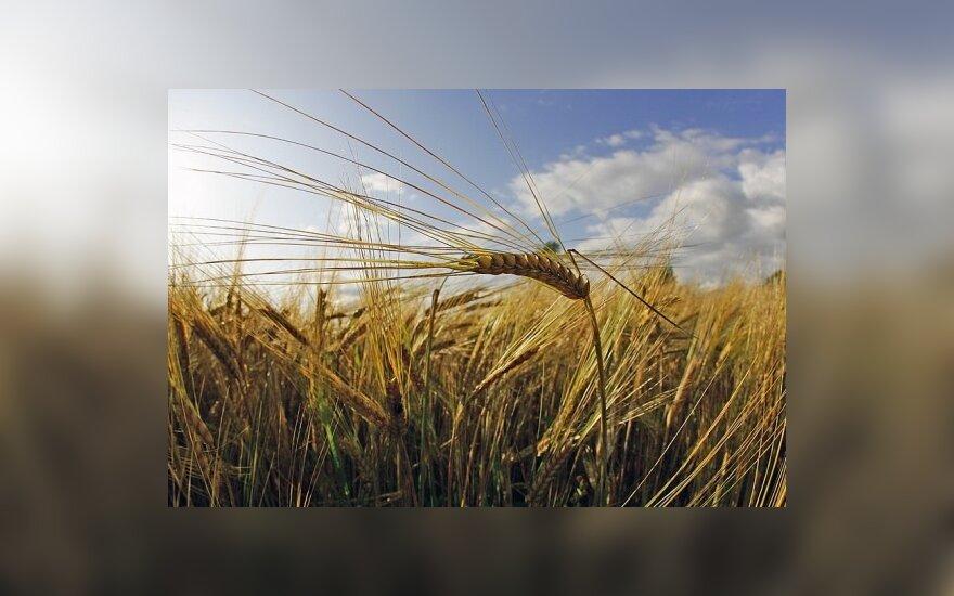 ЕК считает, что разгул стихии не скажется на урожае