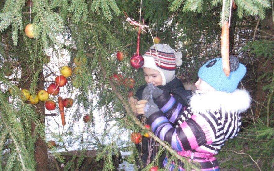 Žaliosios Kalėdos 2013