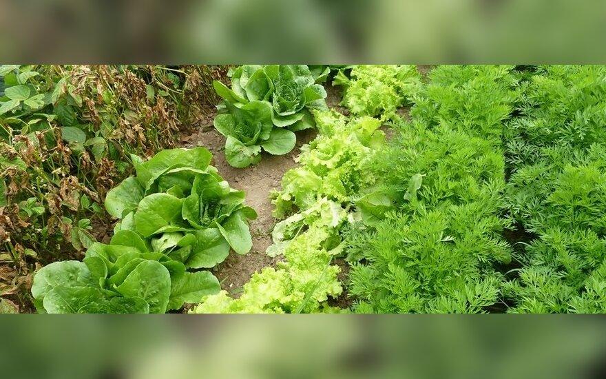 Зеленая диета для похудения