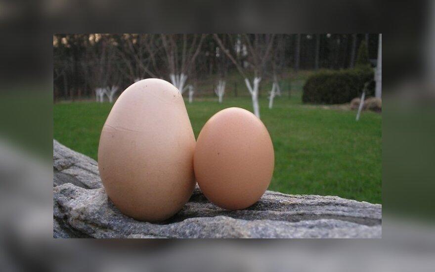 Чудо из Дзукии: яйцо в яйце