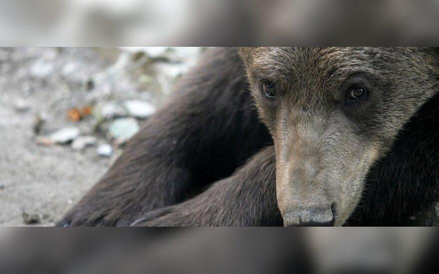 В Петербурге на женщину напал медведь