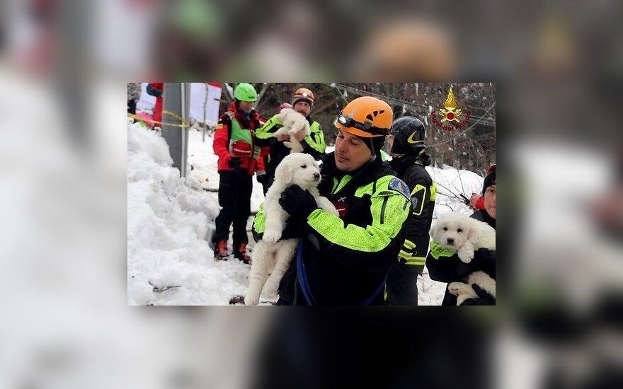В Италии из накрытого лавиной отеля спасли трех щенков