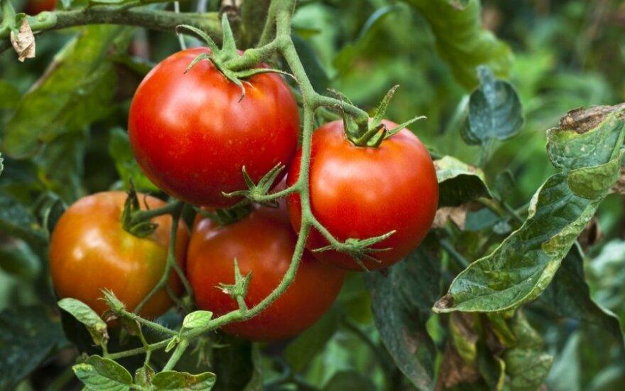 """""""Трудовики"""" предлагают 5%-ый НДС на овощи, фрукты и мясо"""