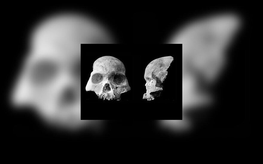 Череп человека из пещеры Благородного Оленя. Фото из статьи авторов.