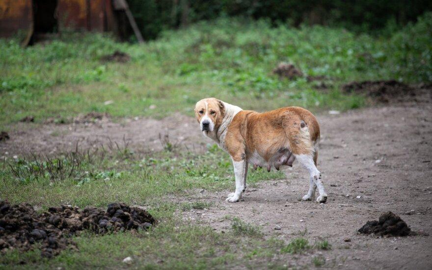 Ветеринарная служба Литвы получила больше 250 сообщений о нарушениях условий содержания животных