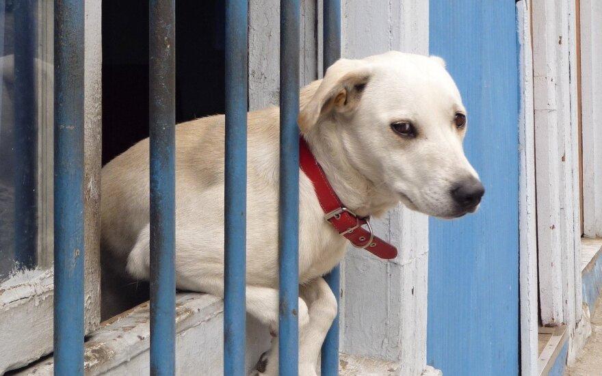 В Подмосковье нашли свалку трупов собак