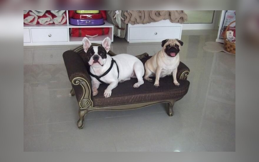 Naminių gyvūnų viešbutis