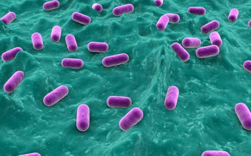 Žarnyno bakterijos