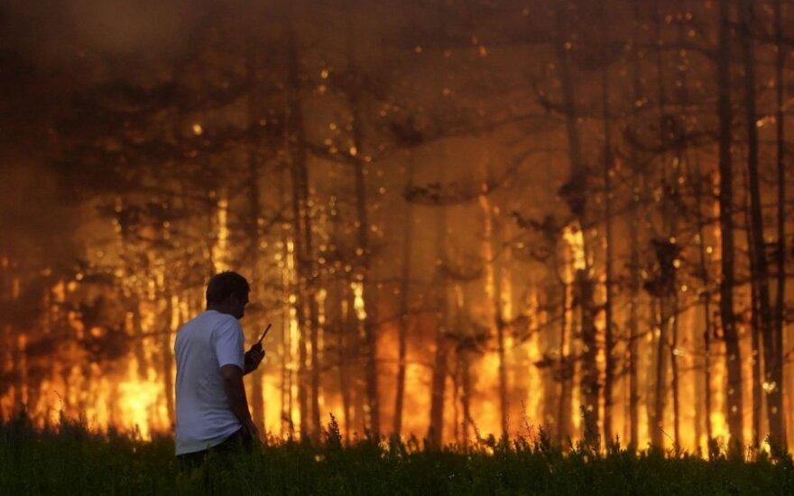 Калифорния охвачена крупными пожарами. Трамп советует вырубать деревья