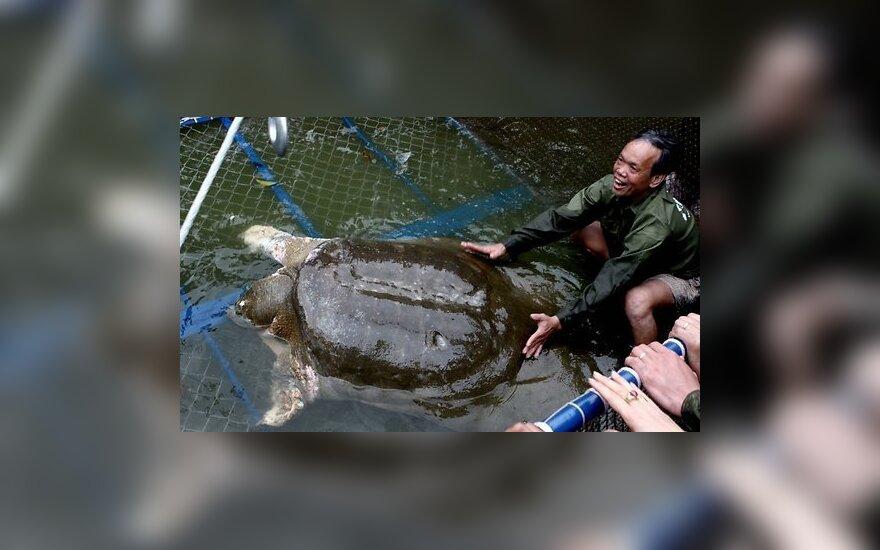 Во Вьетнаме умерла старейшая в мире гигантская священная черепаха
