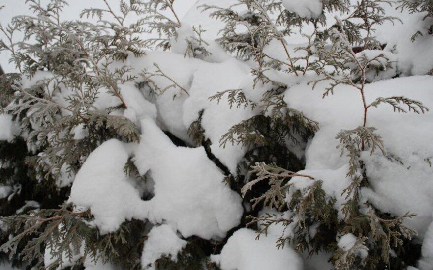 В Новой Зелании — самый мощный снегопад за 40 лет