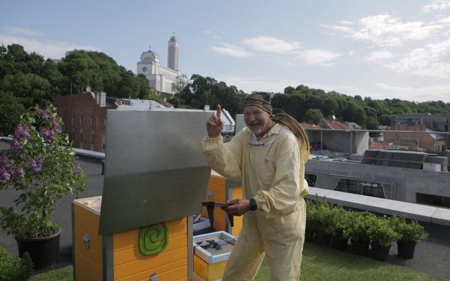 В центре Каунаса на офисном здании поселили 100 000 пчел