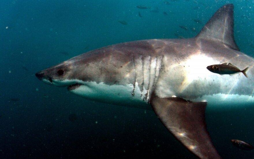 Австралиец оштрафован на $18 000 за убийство белой акулы