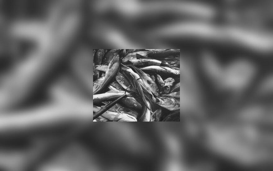 Žuvis, menkė