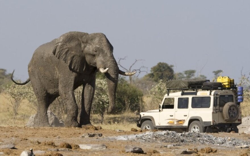 В Африке слон затоптал браконьера, а его тело съели львы
