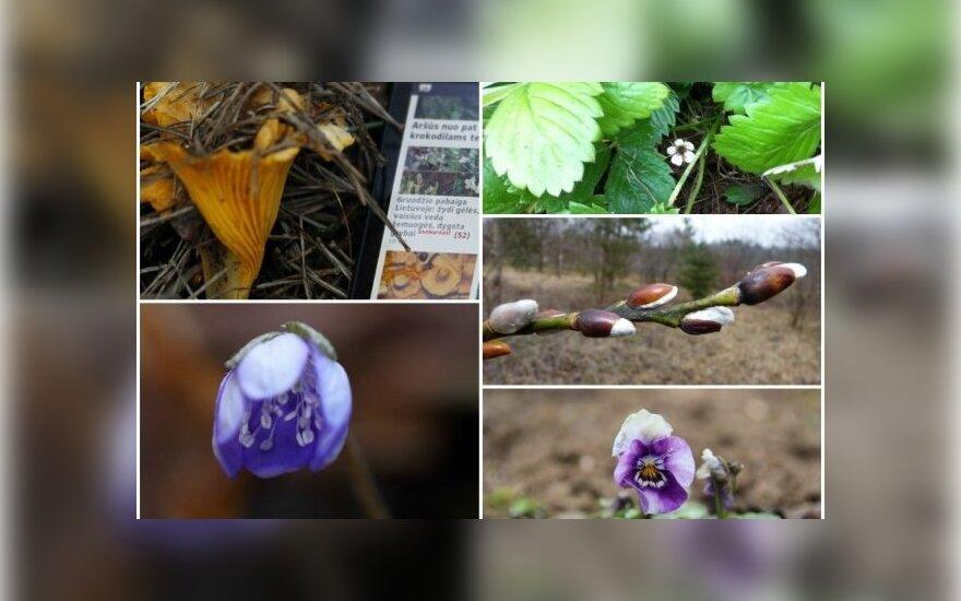 """Nuotraukos, atsiųstos konkursui """"Pavasarinė žiema""""  (GRYNAS.lt skaitytojų nuotraukos)"""