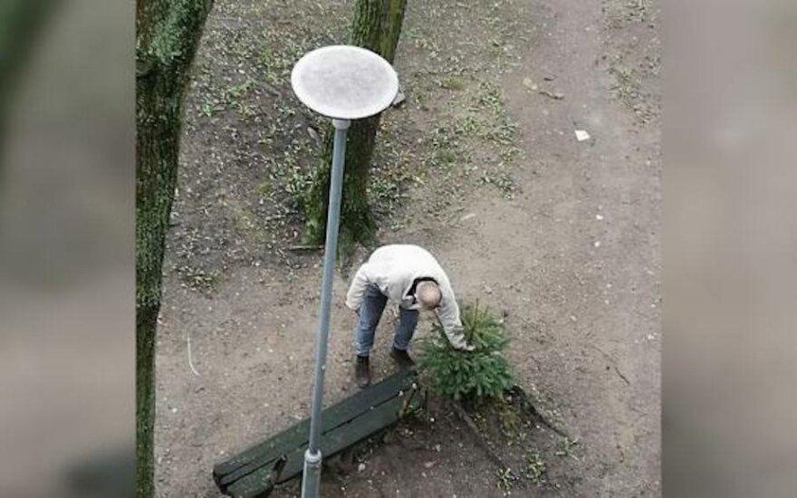 Жительница Клайпеды пытается спасти елки, не боится даже штрафа