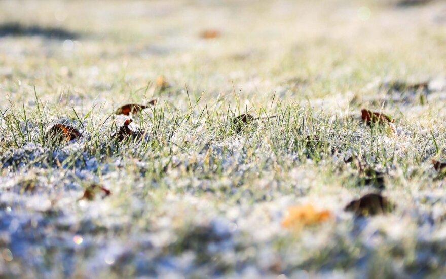 Orai: šaltukas puošia