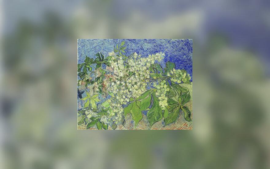 """Vincento van Gogho paveikslas """"Žydinčio kaštono šakos"""""""