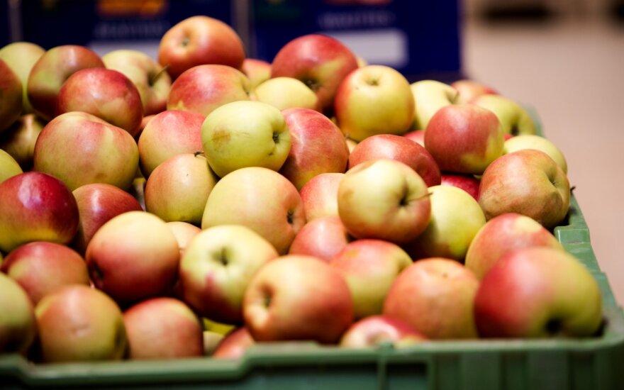 Исследование: в Литве дорожает картошка и дешевеют яблоки